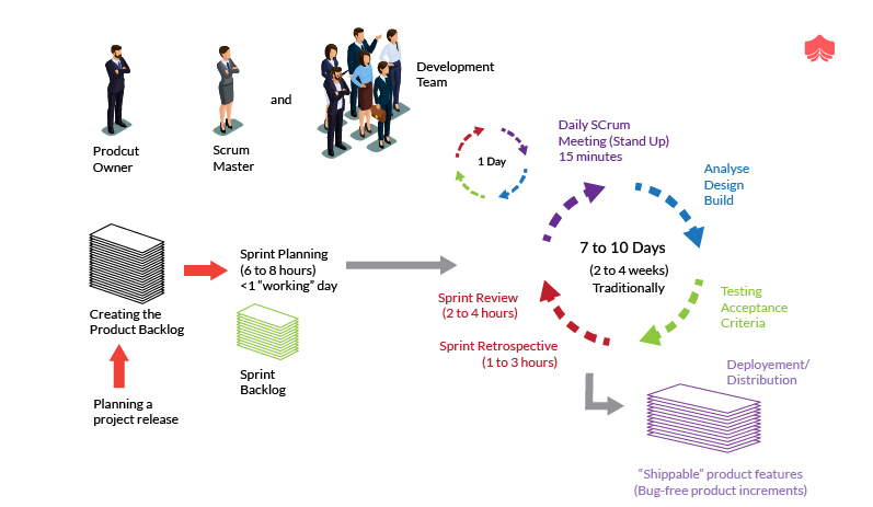 How long the scrum cycle last Who are involved in Scrum cycle