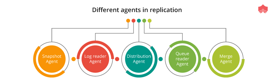 different agents in replication